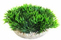 Vezi produsul Sydeco Planta Medal-shaped Green Moss 6 Cm 380340 in magazinul animalulfericit.ro